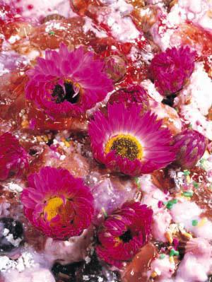 photographers' gallery File 07  「ニジノハラワタ」高橋 万里子