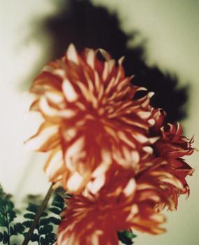 01 高橋万里子「月光 2. 赤い花」 タイプ Cプリント / ed. 10  作品サイズ:558×455mm