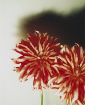 02 高橋万里子「月光 2. 赤い花」 タイプ Cプリント / ed. 10  作品サイズ:558×455mm