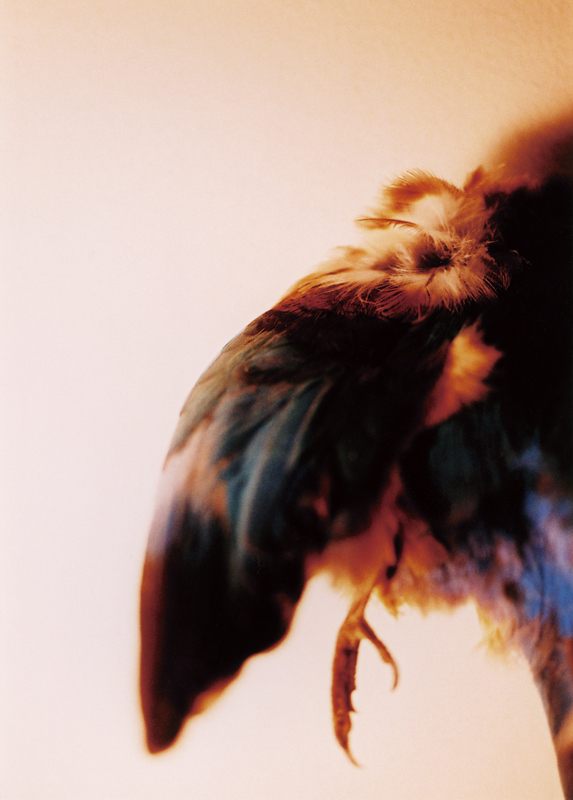 """Mariko Takahashi/高橋 万里子: """"Night Birds"""""""