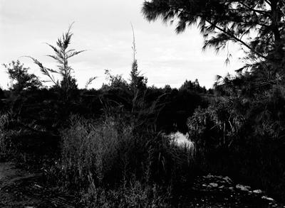 01 大友真志「GRACE ISLANDS──南大東島、北大東島」 ゼラチンシルバープリント / ed. 8  paper size:279×356mm