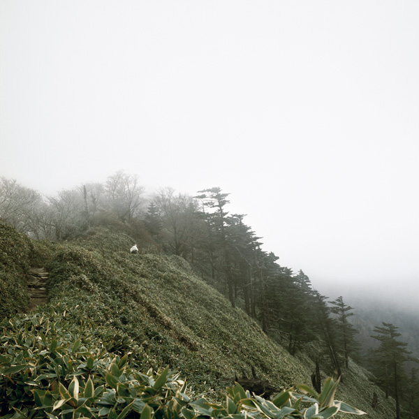 "Keiko Sasaoka/笹岡 啓子: ""True View of Kuma-yama/久万山真景"""