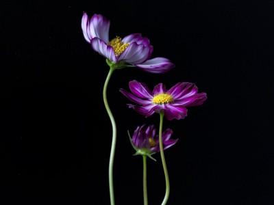 "Saki Nakamura/中村 早  ""Flower"""