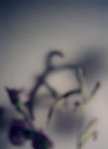 02 高橋万里子「月光画」 タイプ Cプリント / ed. 7  作品サイズ:545×400mm