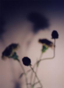 03 高橋万里子「月光画」 タイプ Cプリント / ed. 7  作品サイズ:545×400mm