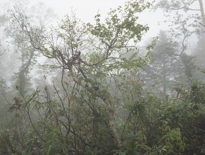 01 大友真志 「Mourai」 タイプCプリント / ed. 8 image size:248×333mm  paper size:279×356mm