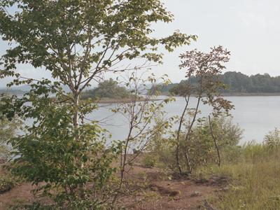 02 大友真志 「Mourai」 タイプCプリント / ed. 8  image size:237×316mm  paper size:279×356mm
