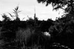 "Masashi Otomo/大友 真志  ""Grace Islands —南大東島、北大東島"""