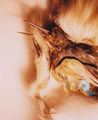 02 高橋万里子「月光 3. 剥製」 タイプ Cプリント / ed. 10  作品サイズ:558×455mm