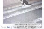 掲載紙:大島尚悟 「ギャラリーbe 」朝日新聞 be on Saturday 2013年10月26日刊