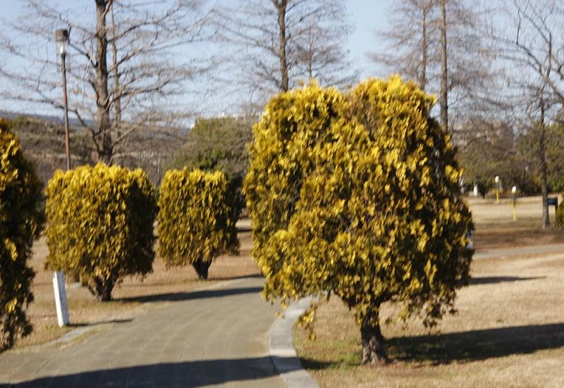 oshima-03